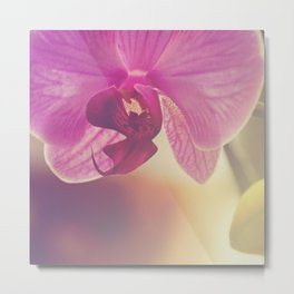 Morning Orchids Metal Print
