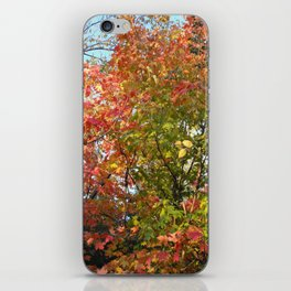 Autumn Leaves I iPhone Skin