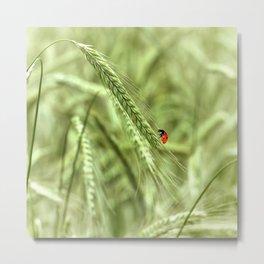 Ladybug 39 Metal Print