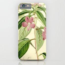 Flower 5625 impatiens latifolia Broad leaved Cingalese Balsam1 iPhone Case