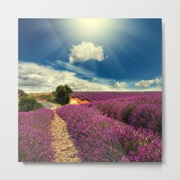 Beautiful image of lavender field Metal Print