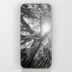 Banyan Tree iPhone & iPod Skin