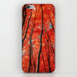 Red Forest of Sunlight iPhone Skin