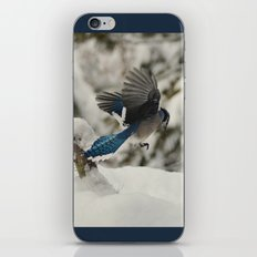 Blue Jay action iPhone & iPod Skin