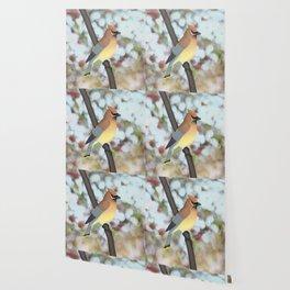 cedar waxwing - bokeh Wallpaper