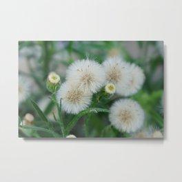 Tiny blooming flowers Metal Print