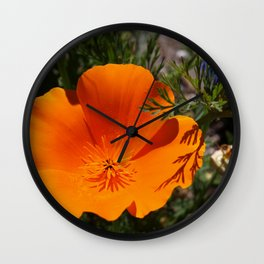 Brilliant California Poppy Wall Clock