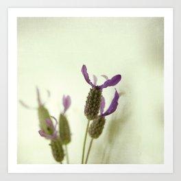 Lavender moment Art Print