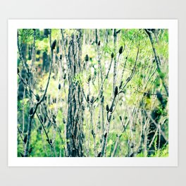Australian Conesticks Woodland Scenery Art Print