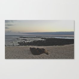 Sea lions Canvas Print
