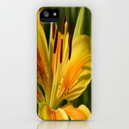 Beautiful Yellow Lily iPhone Case