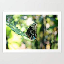 With a Broken Wing... Art Print