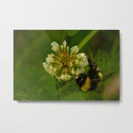 Bumble Bee Photography Print Metal Print