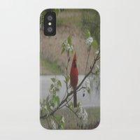 cardinal iPhone & iPod Cases featuring Cardinal  by Earth'sAnimalActivist23