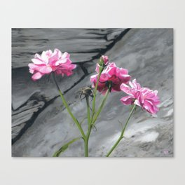 Three Pink Roses Canvas Print
