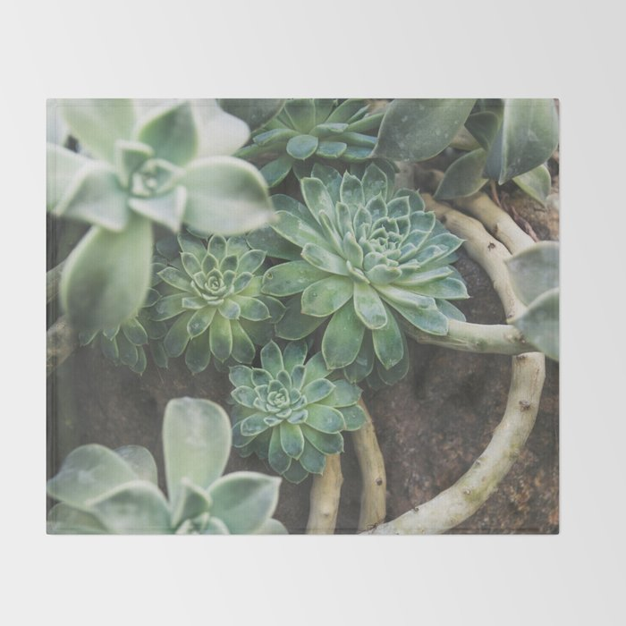 Botanical Gardens Succulent #625 Throw Blanket