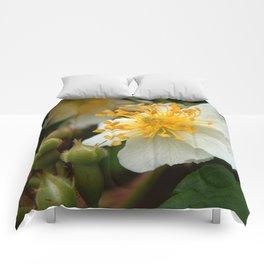 Flower AA Comforters