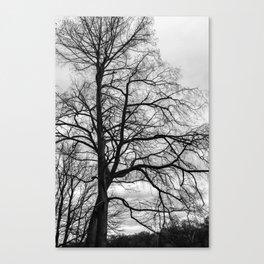 Black white tree Canvas Print