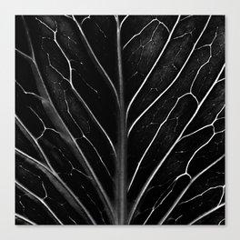 The black leaf Canvas Print