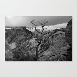 Withered Tree on top of Mountain Range, Big Bend - Landscape Photography Canvas Print