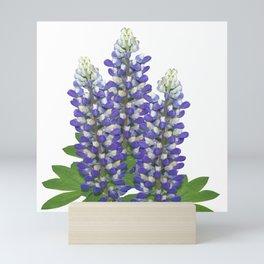 Blue and white lupine flowers Mini Art Print