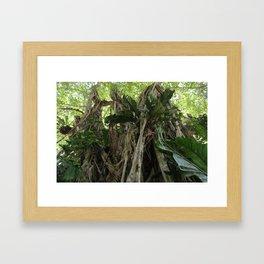 Wild Belize Jungle Framed Art Print