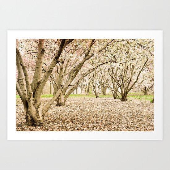 Blossom of Spring Art Print