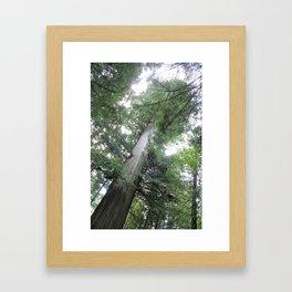 Brotherhood Of Man Tree Framed Art Print