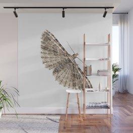 Montana Six-plumed Moth (Alucita montana) Wall Mural