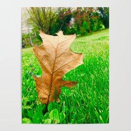 A Walk Through The Seasons Poster