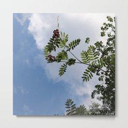 Berries in the sky 2 Metal Print