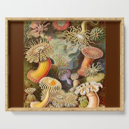 Haeckel Illustration - Marine Life Serving Tray
