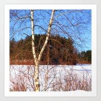 Birch tree in winter Art Print
