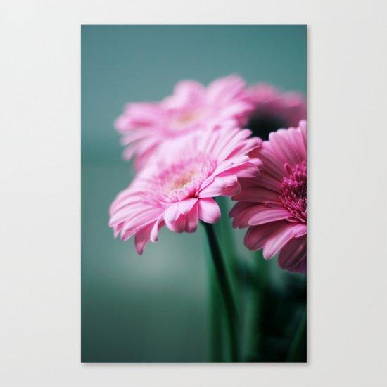 Pink Gerbera Dream°2 Canvas Print