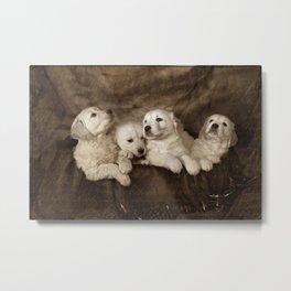 Golden Retriever Pups Metal Print