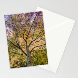 Beautiful Trees / 12 Stationery Cards