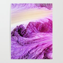 Purple Cabbage Beautiful Abstract Patterns By Nature Poster
