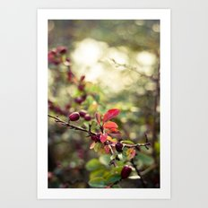 Autumn Glow I Art Print