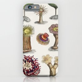Different kinds of Actiniae or Animal Flowers from A history of the earth and animated nature (1820) iPhone Case