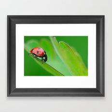 Ladybug Framed Art Print
