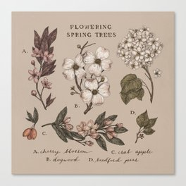Flowering Spring Trees Canvas Print