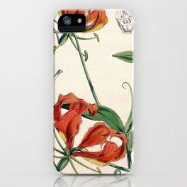 Gloriosa superba iPhone Case