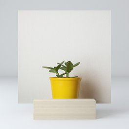 Succulent in a yellow pot Mini Art Print