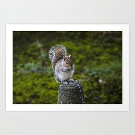 The Chubby Squirrel Art Print