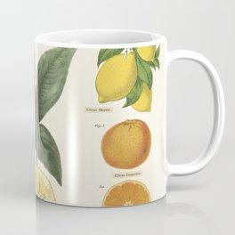 Citrus Fruits Lime Lemons Vintage Scientific Illustration Encyclopedia Labeled Diagrams Coffee Mug