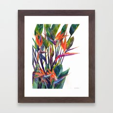 The bird of paradise Framed Art Print