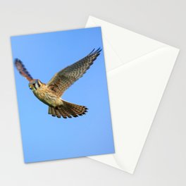 An American Kestrel Flying Looking For Prey in Nehalem, Oregon Stationery Cards