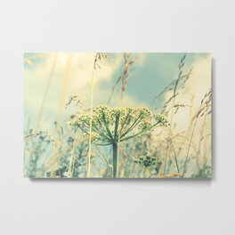 Queen Anne's Lace Flower Summer Photography Metal Print