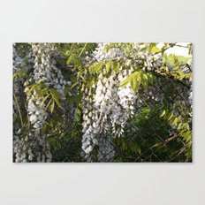 Flowers growing through a fence Canvas Print
