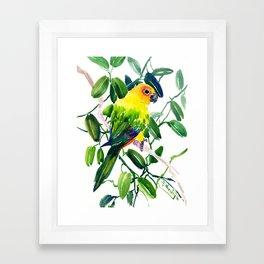 Sun Conure Parakeet, jungle tropical colors, parrot yellow deep green bright colored home decor Framed Art Print
